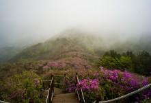 남원 봉화산 철쭉과 안개.